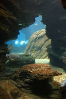 Aquarium Stock 35 by Malleni-Stock