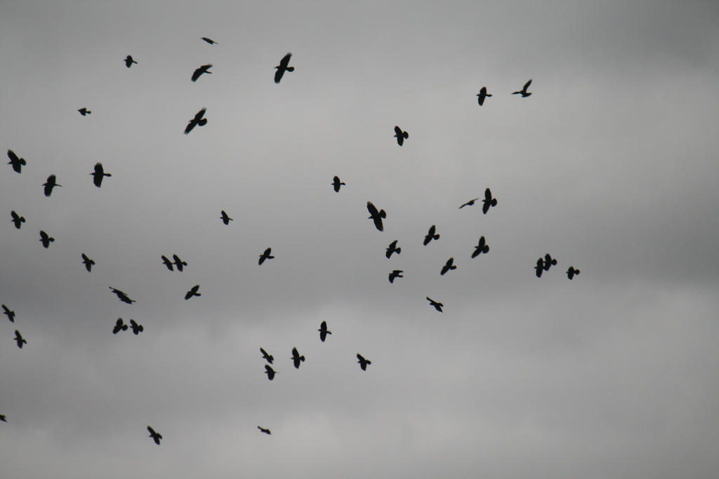 Birds Stock 02 by Malleni-Stock