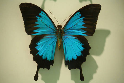 Butterfly Stock 35 (private use)