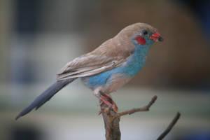 Bird Stock 18 by Malleni-Stock
