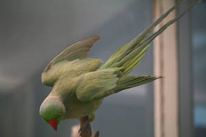 Bird Stock 19 by Malleni-Stock