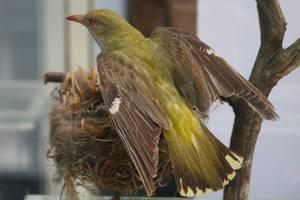 Bird Stock 25 by Malleni-Stock