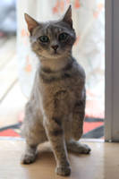 Cat Stock 13 by Malleni-Stock