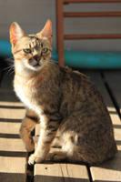Cat Stock 18