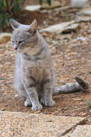 Cat Stock 19 by Malleni-Stock