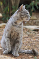 Cat Stock 20 by Malleni-Stock