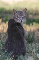 Cat Stock 22