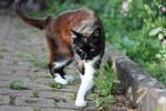 Cat Stock 28