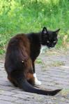 Cat Stock 37
