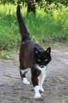 Cat Stock 36