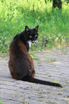 Cat Stock 38