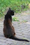 Cat Stock 34
