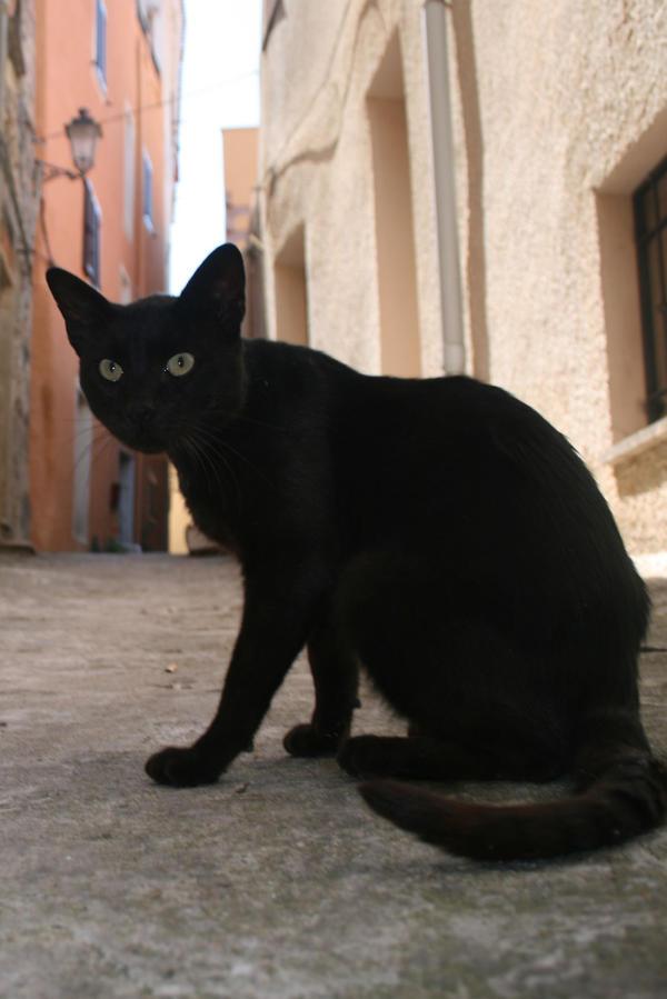 Cat Stock 48