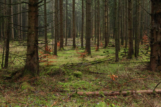 Forest Stock 042
