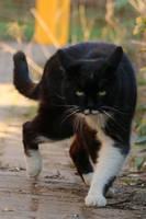 Cat Stock 51