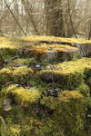 Mossy log Stock 02