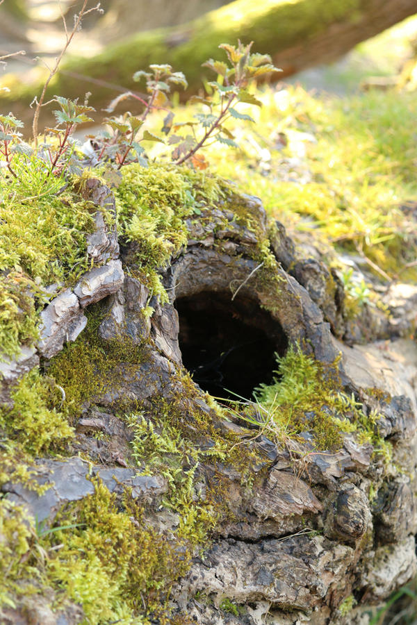 Mossy log Stock 01 by Malleni-Stock