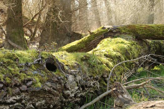 Mossy log Stock 05