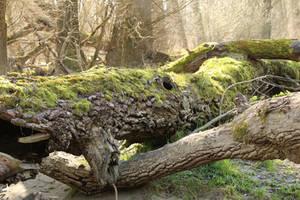 Mossy log Stock 04
