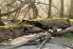 Mossy log Stock 03