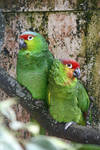 Bird Stock 053