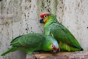 Bird Stock 052
