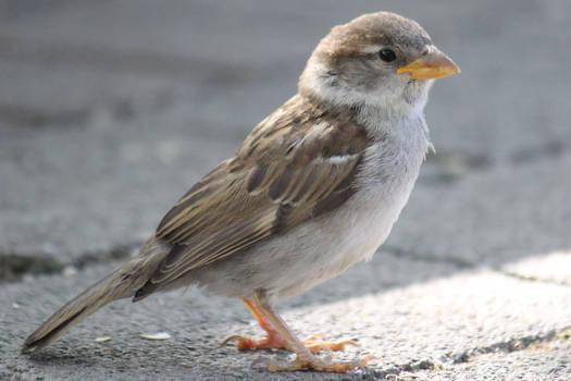 Bird Stock 055