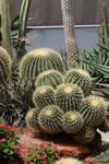 Cactus Stock 08