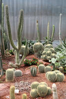 Cactus Stock 02 by Malleni-Stock