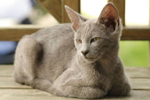 Cat Stock 080
