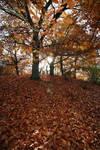 Autumn Stock 15