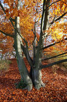 Autumn Stock 14 by Malleni-Stock