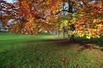 Autumn Stock 05