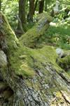 Mossy log Stock 08