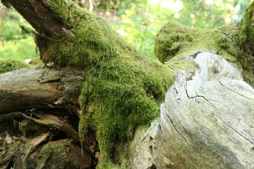 Mossy log Stock 11