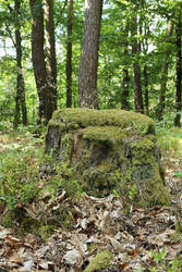 Mossy log Stock 07