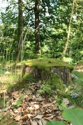 Mossy log Stock 06