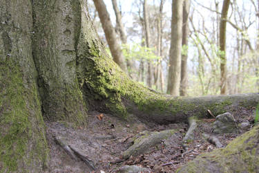 Mossy log Stock 09