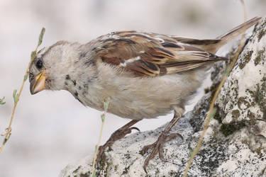 Bird Stock 103 by Malleni-Stock