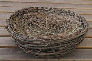 Nest Stock 01 by Malleni-Stock