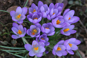 Spring Stock 12 by Malleni-Stock