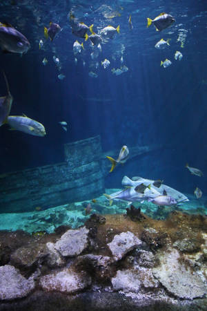 Sea life Stock 01 (private use) by Malleni-Stock