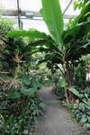Botanical garden Stock 08