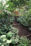 Botanical garden Stock 11