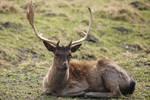 Deer Stock 28