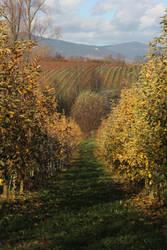 Vineyard Stock 05 by Malleni-Stock