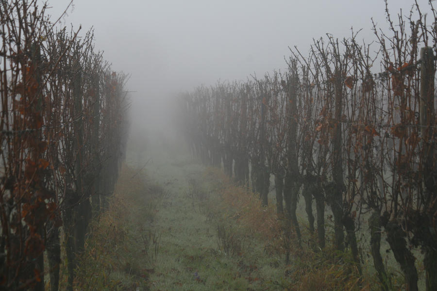 Vineyard Stock 15 by Malleni-Stock