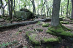 Forest Stock 090 by Malleni-Stock