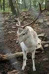 Deer Stock 33