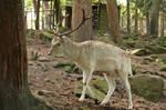Deer Stock 31